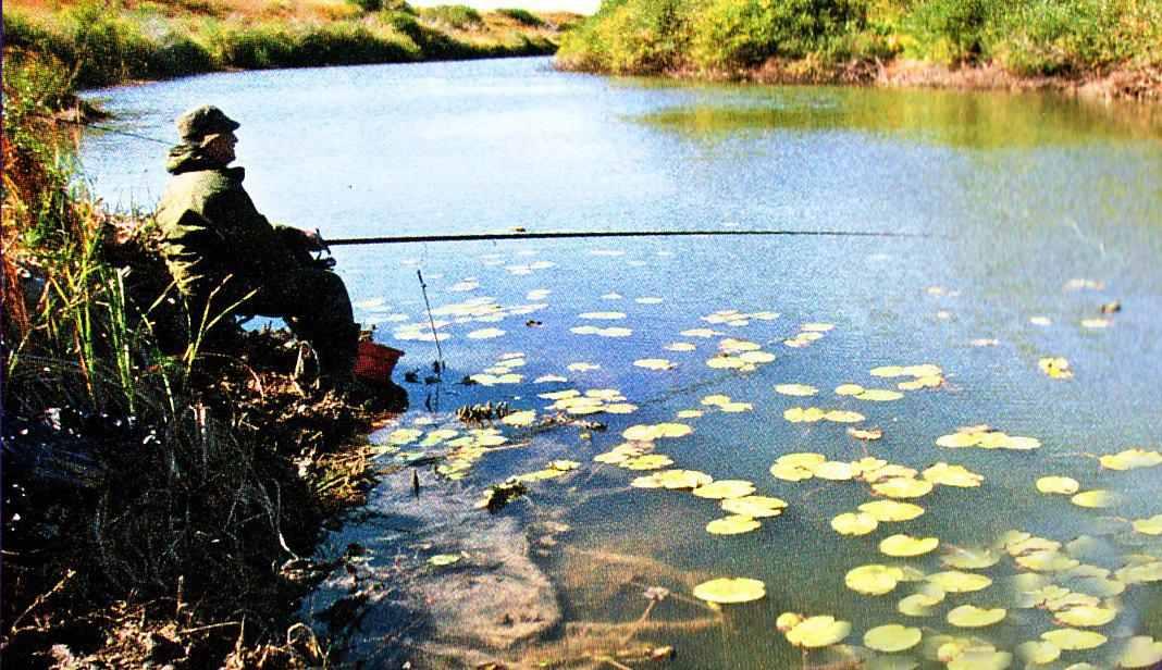 на что и чем ловить рыбу осенью